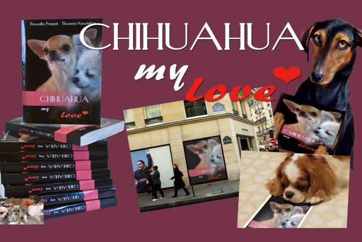 Chihuahua My Love